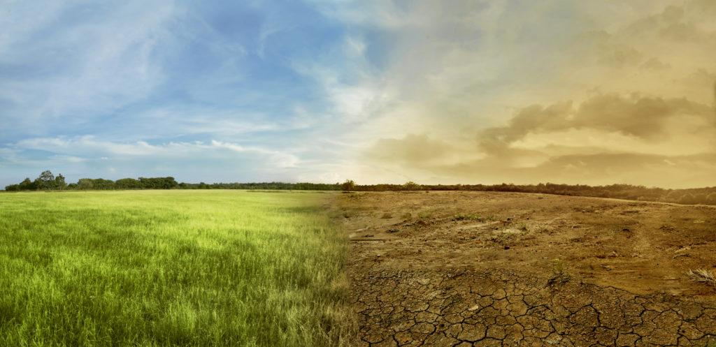 I cambiamenti climatici possono alterare le produzioni agricole e causare insicurezza alimentare, contribuendo all'inasprirsi delle tensioni sociali.